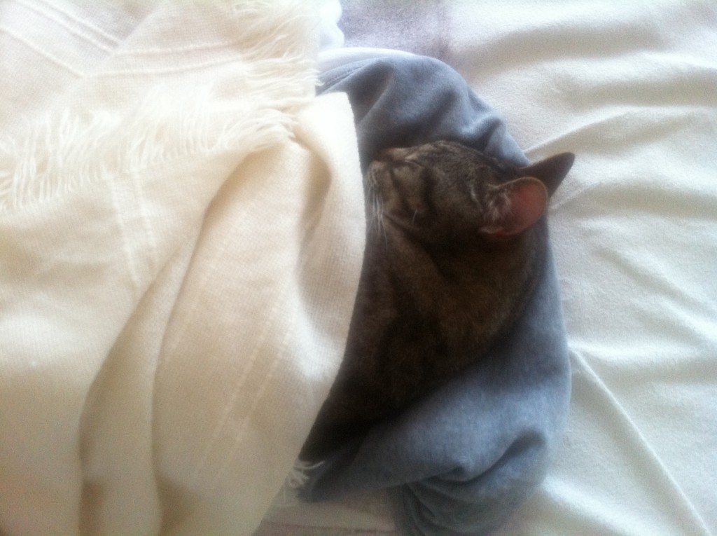 kitty sleeping under a blanket