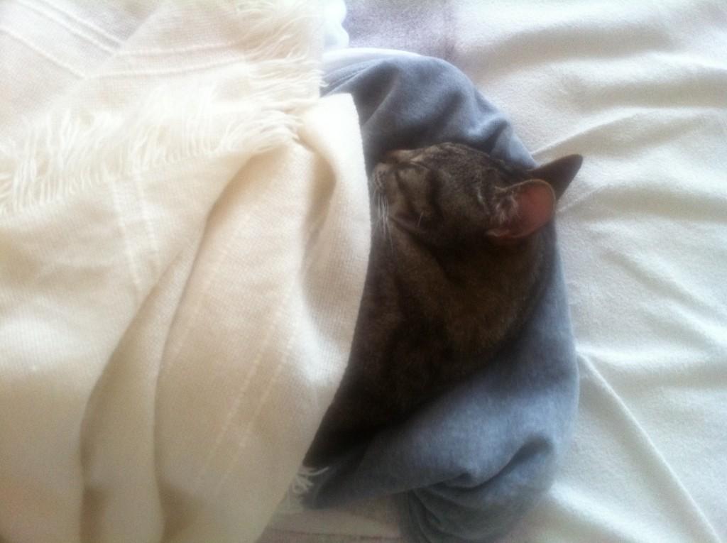 kitty sleeping under a blanket